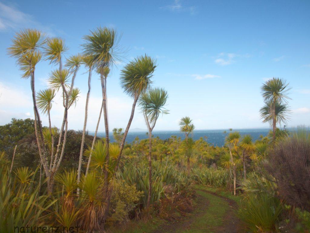 ティリティリ島の風景