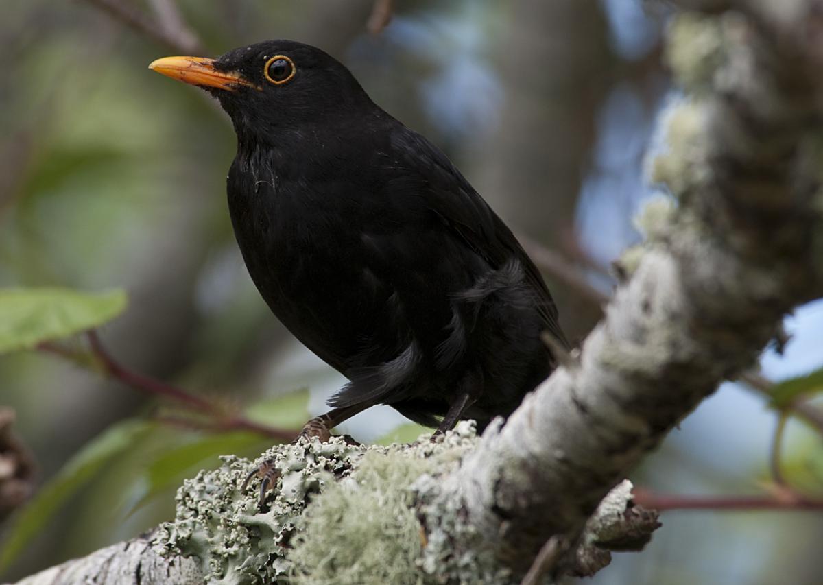 街中で見かける黒い鳥。名前は何て言う?