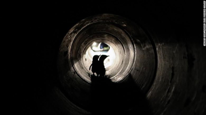 ニュージーランドにペンギン専用のトンネルが出現!