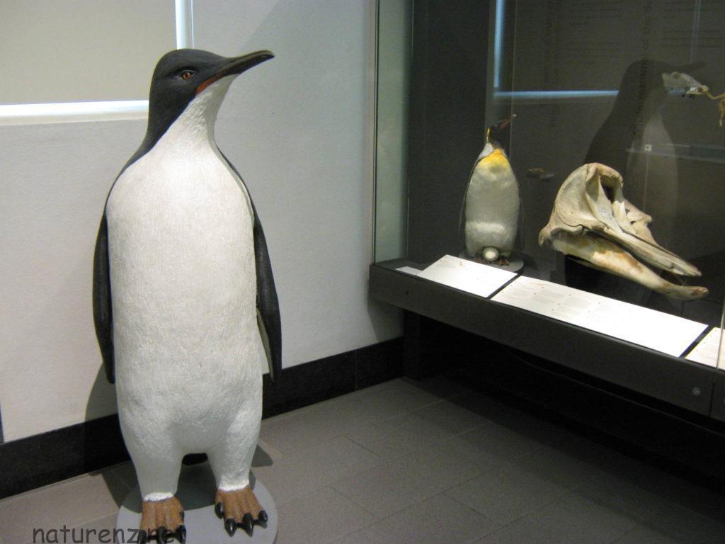 オークランド博物館の等身大Giant Penguin