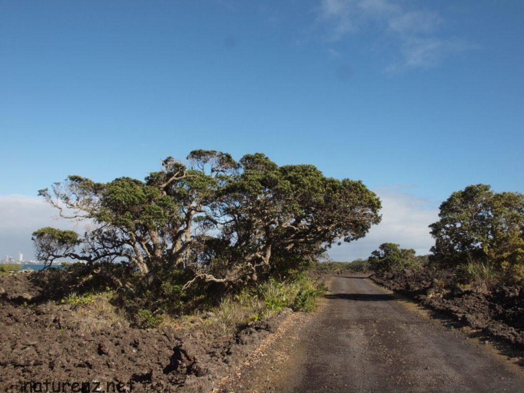 ランギトト島 まばらな木々たち