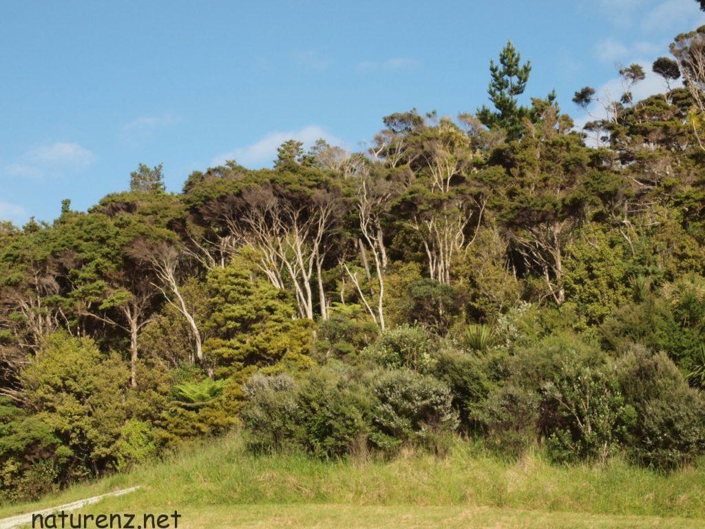 マフランギ自然公園