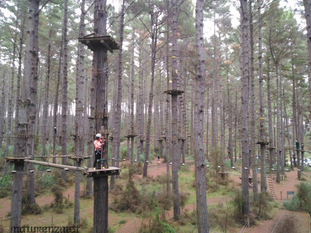 tree adventure tasan's test
