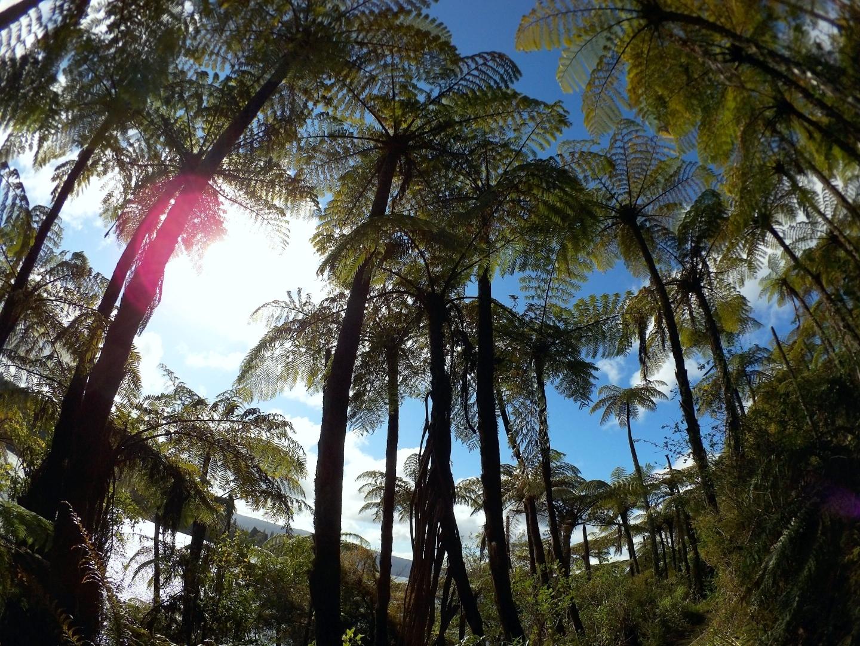 【ロトルアでトレッキング】 湖水が熱い!? 天然温泉を目指すタワウェラ湖トレッキング