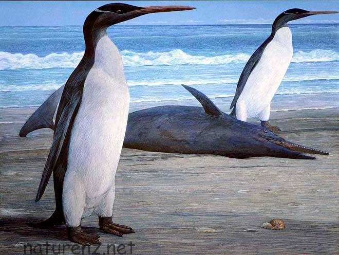 Kairuku penguin