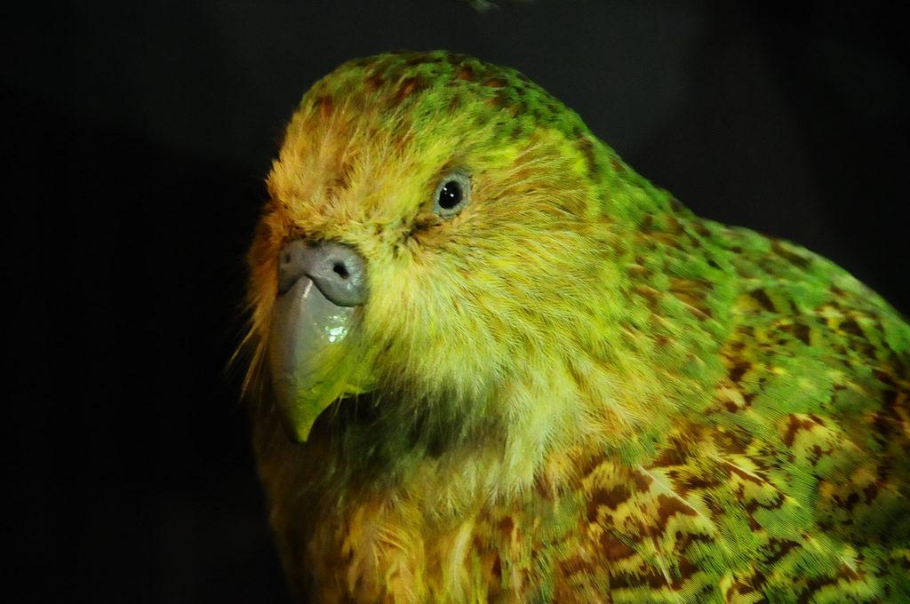 【最新版】ニュージーランドに飛べない鳥が多い3つの理由