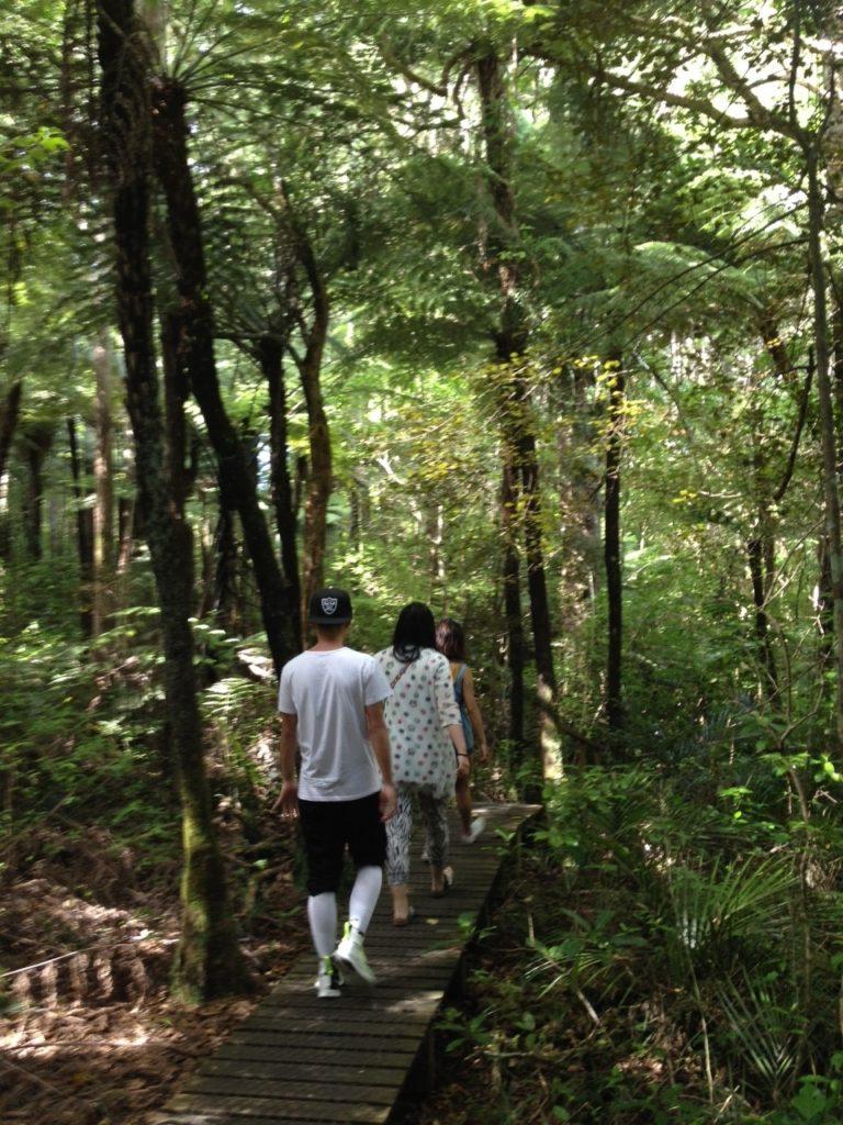 カウリの巨木 ワークワース