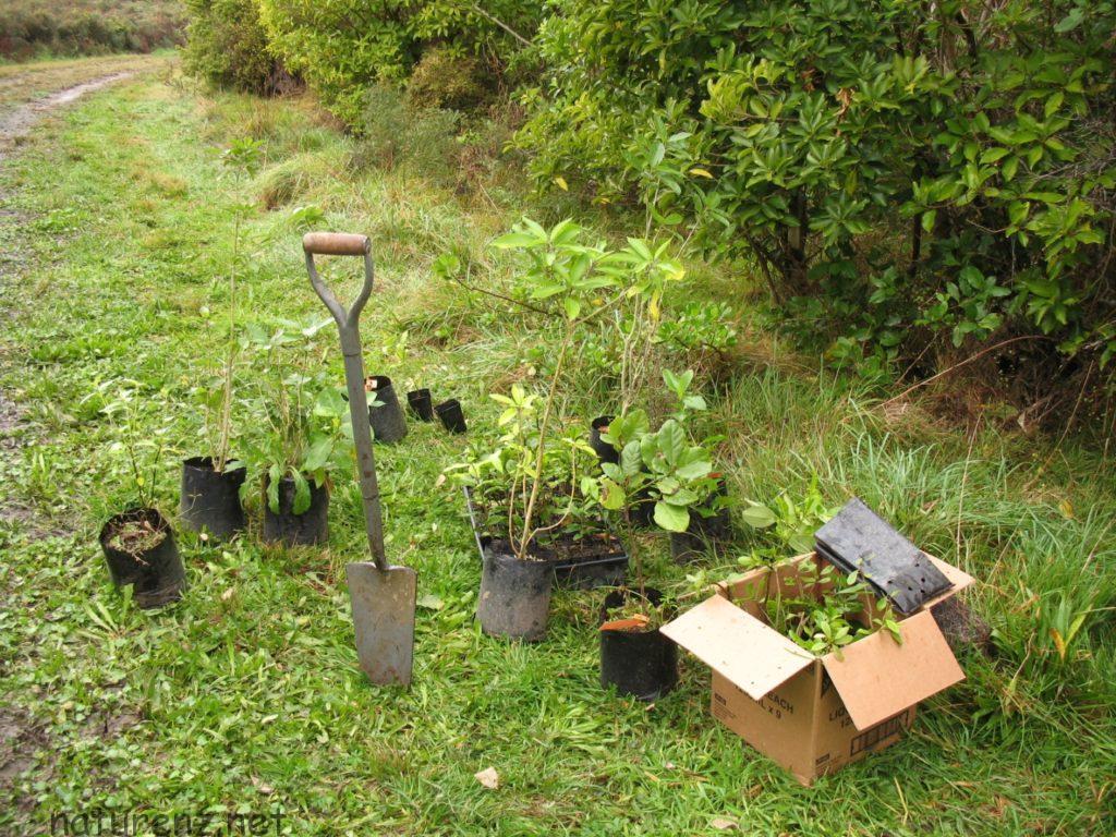 ティリティリ島 植林 自然 ボランティア