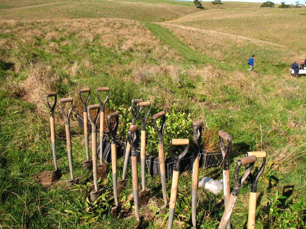 モツイヘ島 植林 ボランティア オークランド