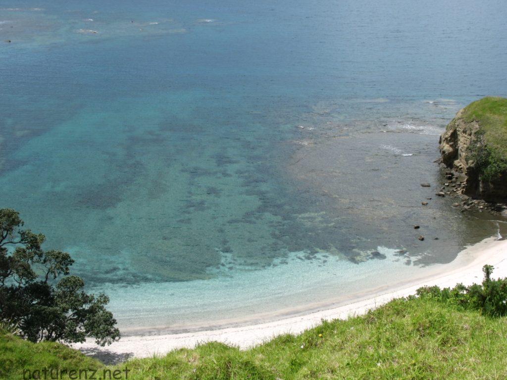 モツオラ島 オークランド ボランティア 植林