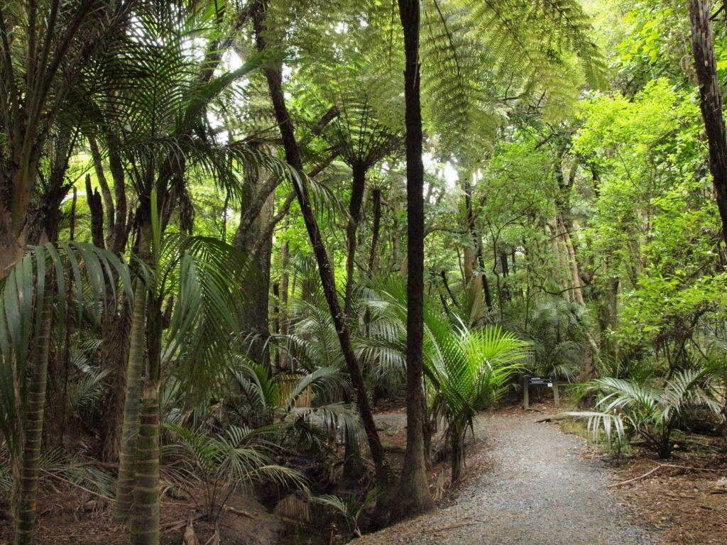 ニュージーランドのトレッキングコース bush walk ハイキング コース