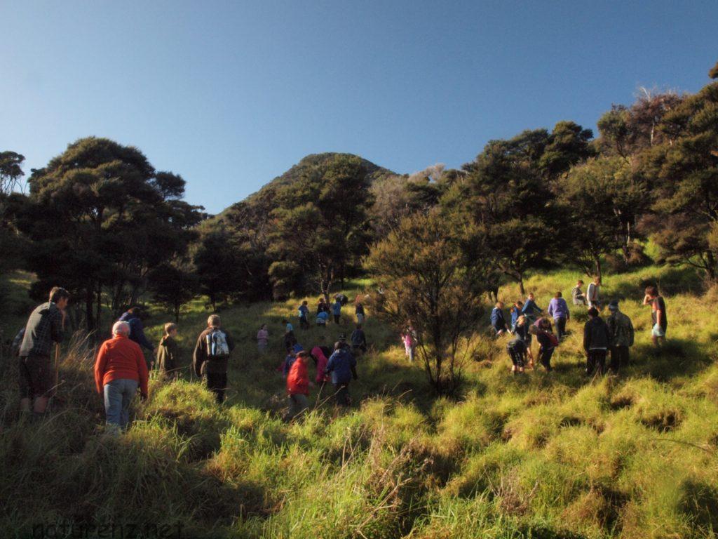 ウーフ体験 ニュージーランド