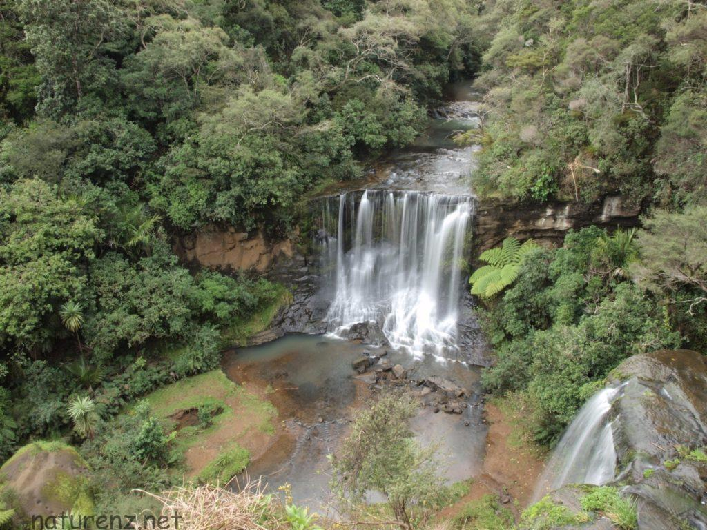 mokoroa falls モコロア滝 オークランド ハイキング トレッキング 滝
