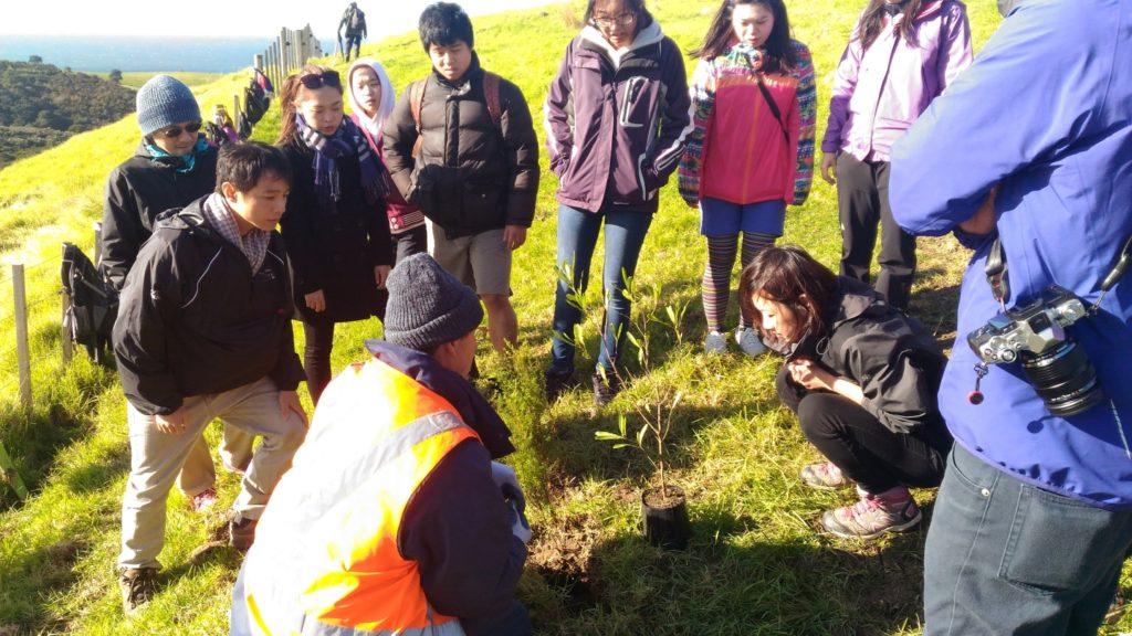 シェイクスピア ボランティア 植林 イベント オークランド 自然 環境