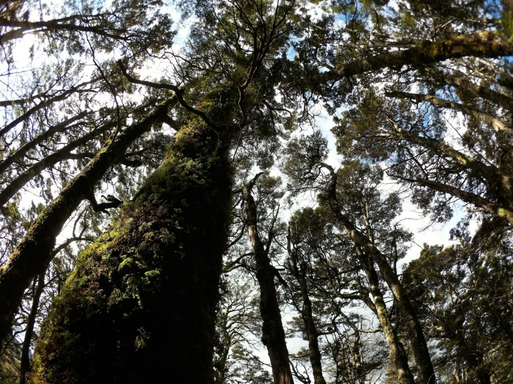 トンガリロ 国立公園 ニュージーランド 北島 tongariro