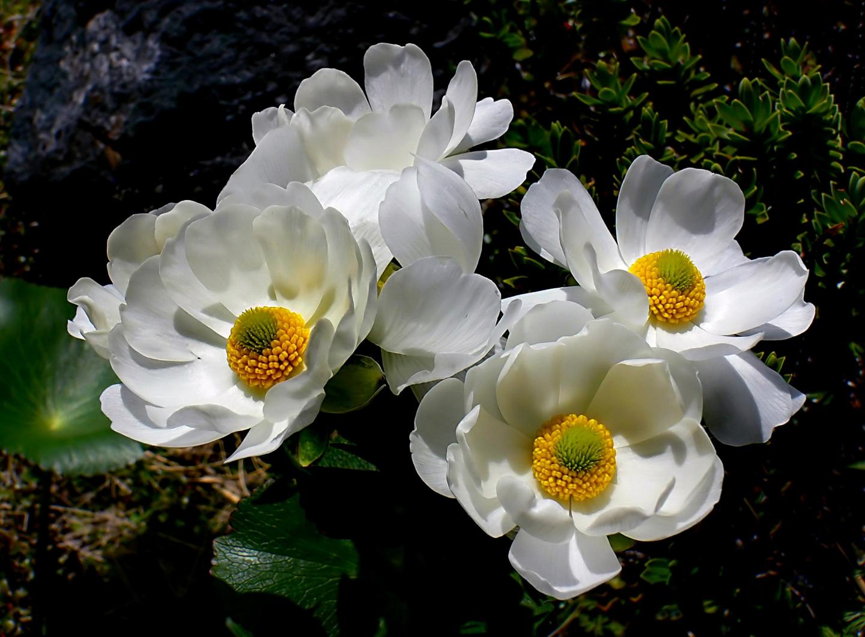 NZの花はなぜ白い!?花の色が教えてくれる、知られざるNZのヒミツ
