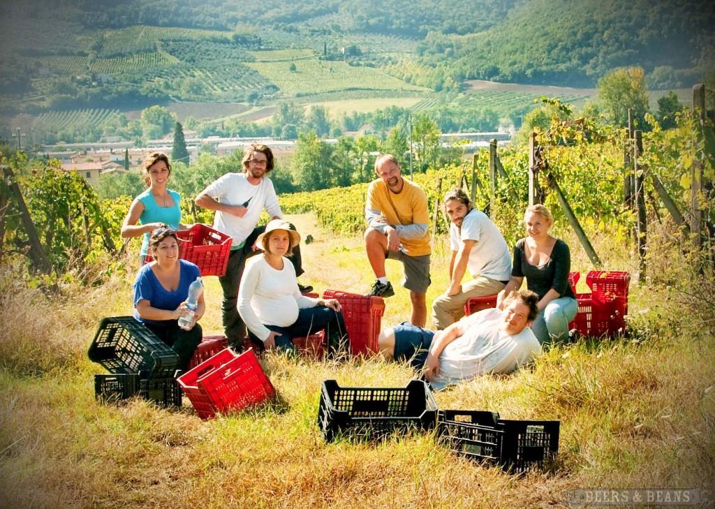 NZで農業体験!WWOOFをおススメする3つの理由