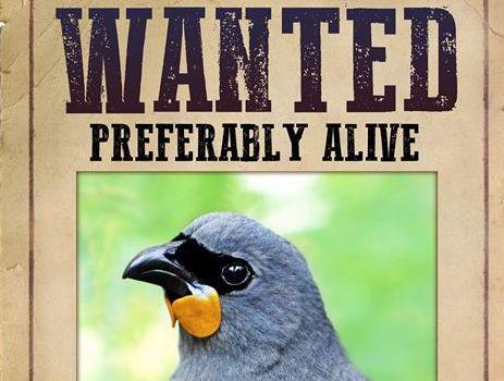 【WANTED】賞金5000ドル!! NZ南島で、絶滅した鳥を探せ!!