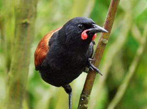 期待以上の野鳥の楽園!タファラヌイ自然公園のエコロジー・トレイルを歩いてみた