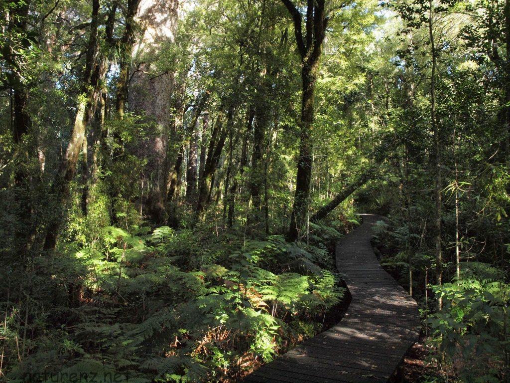 カウリの森「ワイポウア」