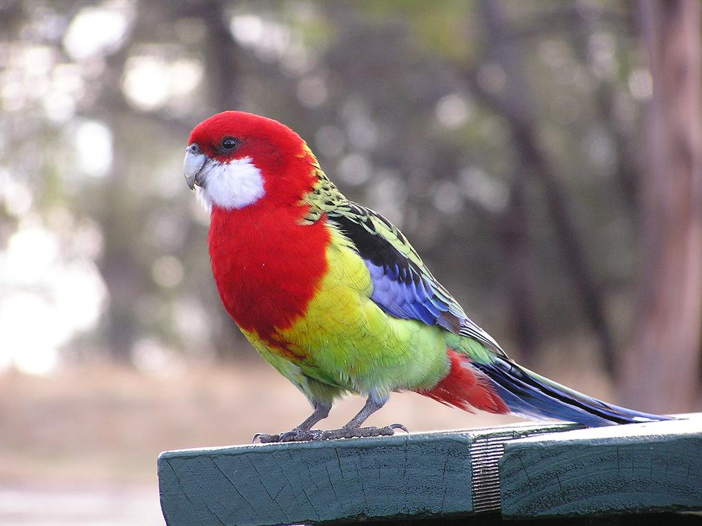 ニュージーランドの街中で見かける野鳥5選