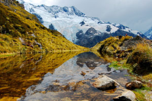 グ・・グロカワイイ!?ニュージーランドの肉食カタツムリが森でミミズを見かけたらこうなる・・