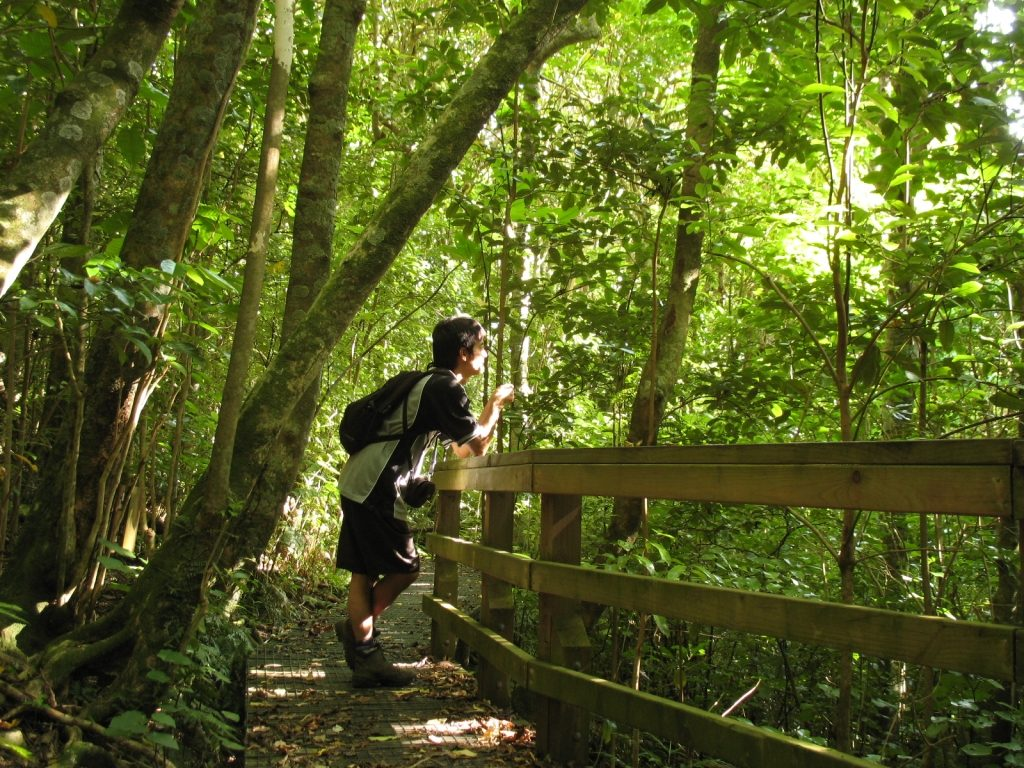タカへはどこに!?鳥の楽園『ティリティリ・マタンギ島』のトレッキング地図