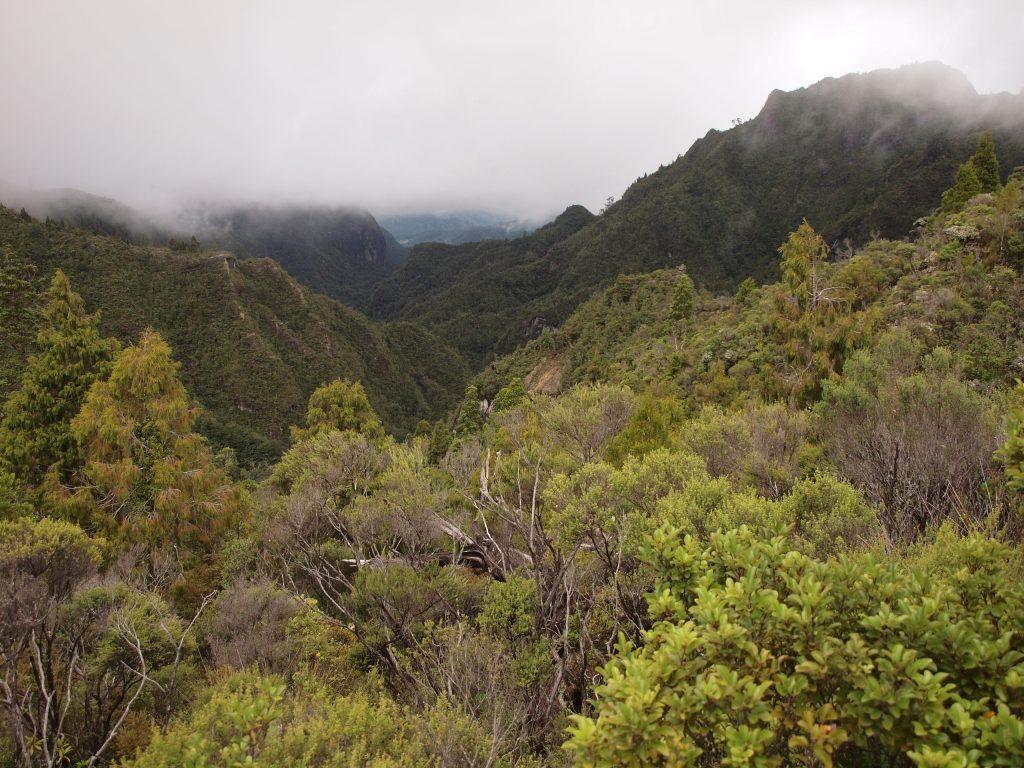 コロマンデル森林公園の深い森