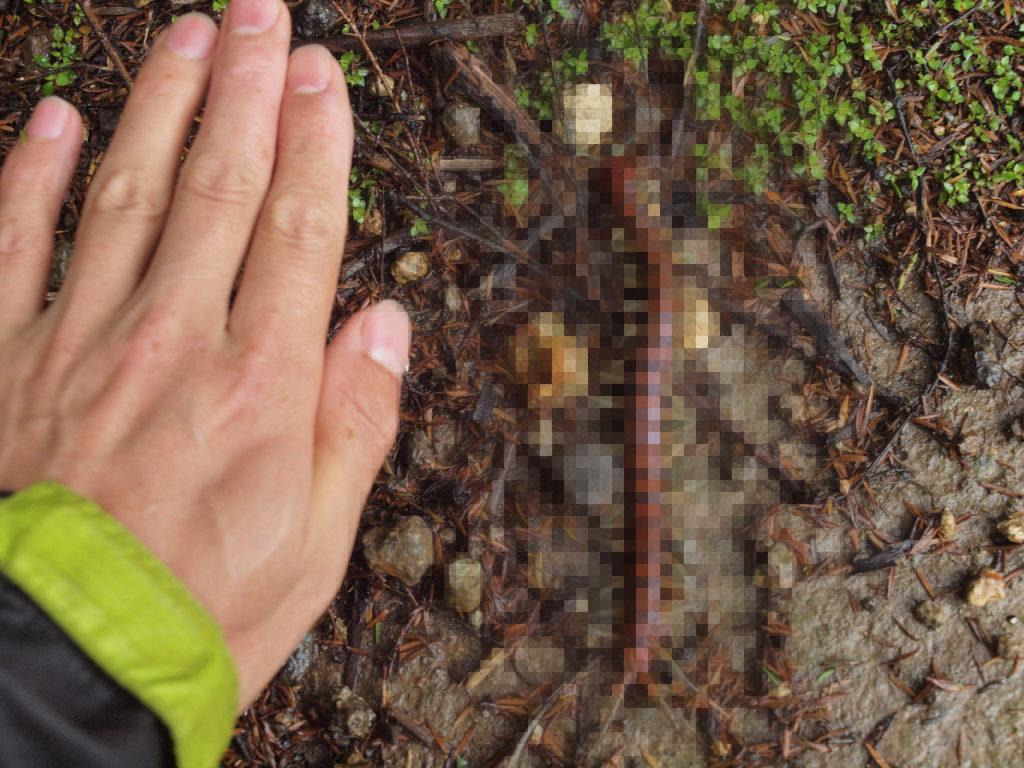 体長20センチの巨大ムカデが足元に・・!NZで起こった奇跡の進化とは?