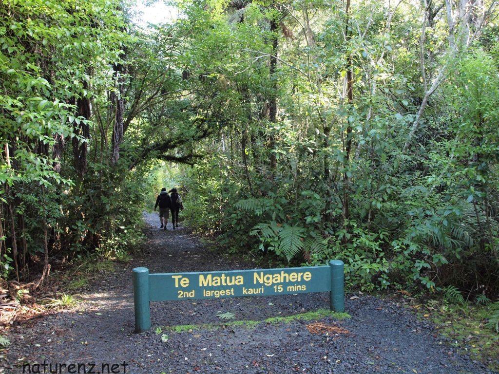 「テ・マツア・ナヘレ」森の父とも呼ばれる