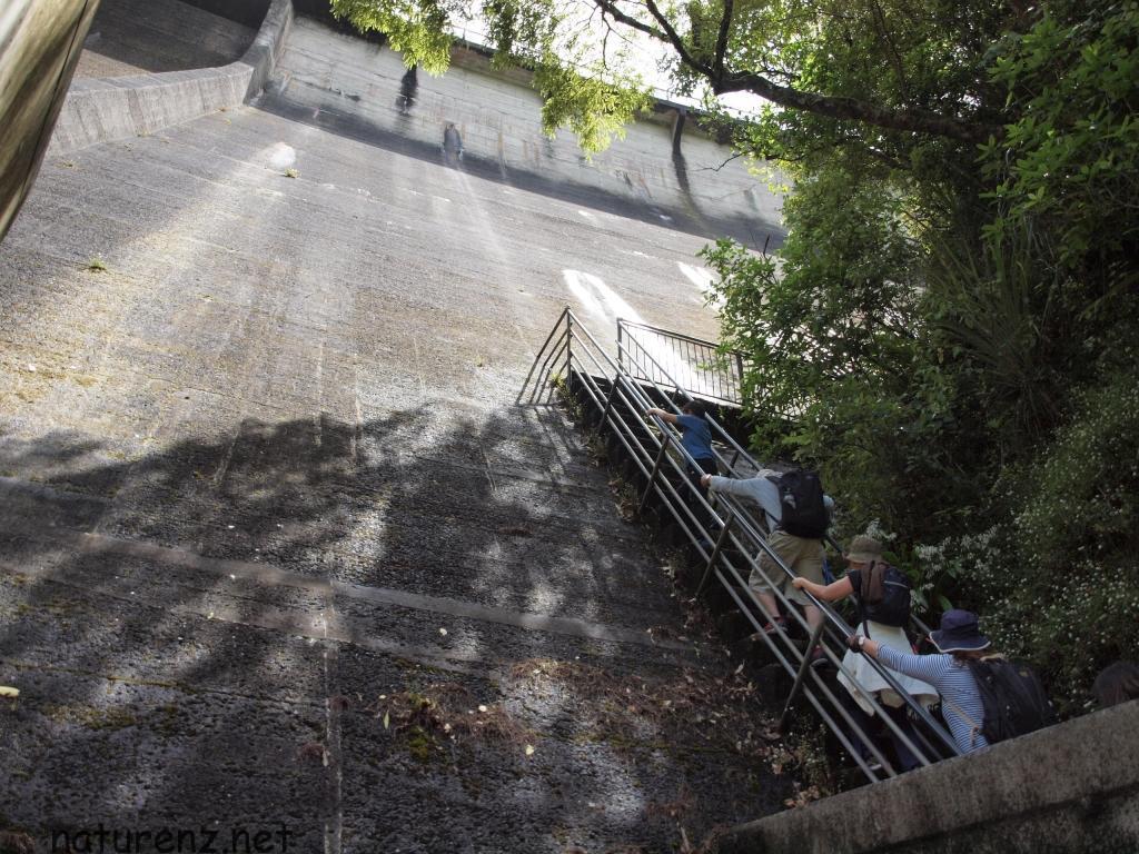 ダムをよじ登る!ワイタケレのダムとトロッコ道のトレッキングコース