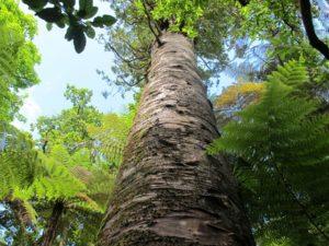 また一歩、絶滅から回避!NZの飛べないオウム「カカポ」のかわいい最新映像