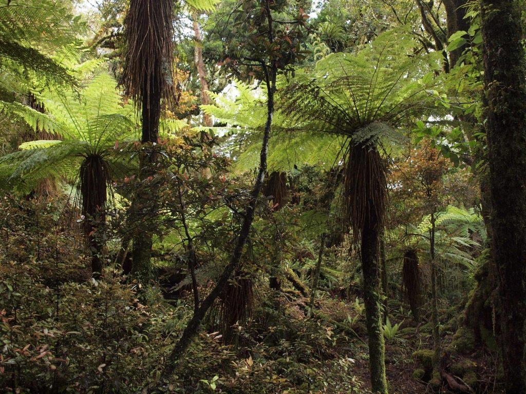 シルバーファーンの森