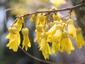 幹は煙突に、新芽は食料に。先住民マオリが愛用した「キャベッジ・ツリー」とは?