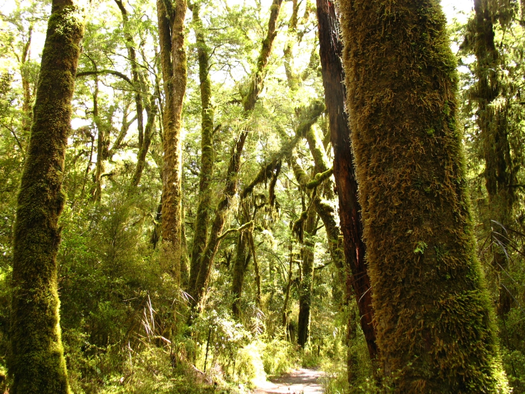 太古のニュージーランドは鳥の楽園だった