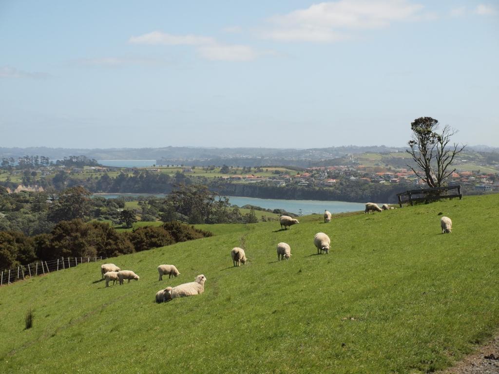 NZのヒツジのいる牧草地帯の風景は、開発の歴史でもあった
