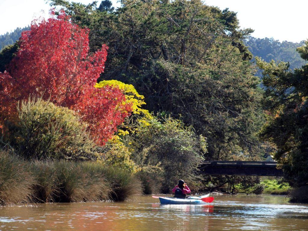 秋のNZで紅葉を楽しもう。オークランドの紅葉スポット8選