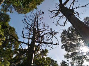 オークランドの原生森が立ち入り禁止になるかも!?その意外な理由とは・・