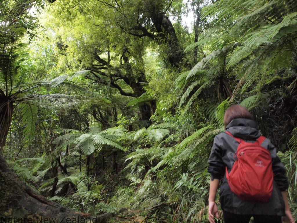 NZで登山→温泉のセットで楽しめる貴重な山『テ・アロハ山』に登ってきた!