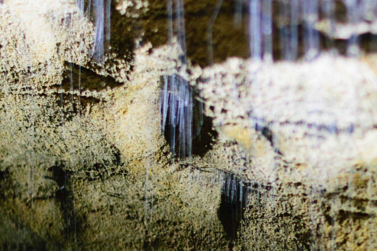 「ワイトモ・ケーブス」3つの洞窟を楽しもう!「アラヌイケーブ」と「ルアクリケーブ」はどう違う?