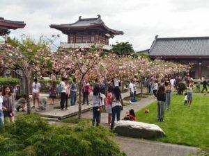 NZ最大の仏教寺院がお花見スポットに!?オークランドの『Fo Guang Shan Temple』
