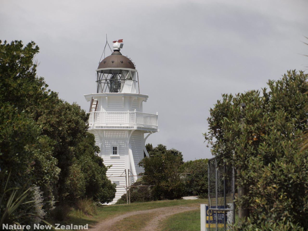 kaitiki point の灯台。この先にイエローアイドペンギンがいる。