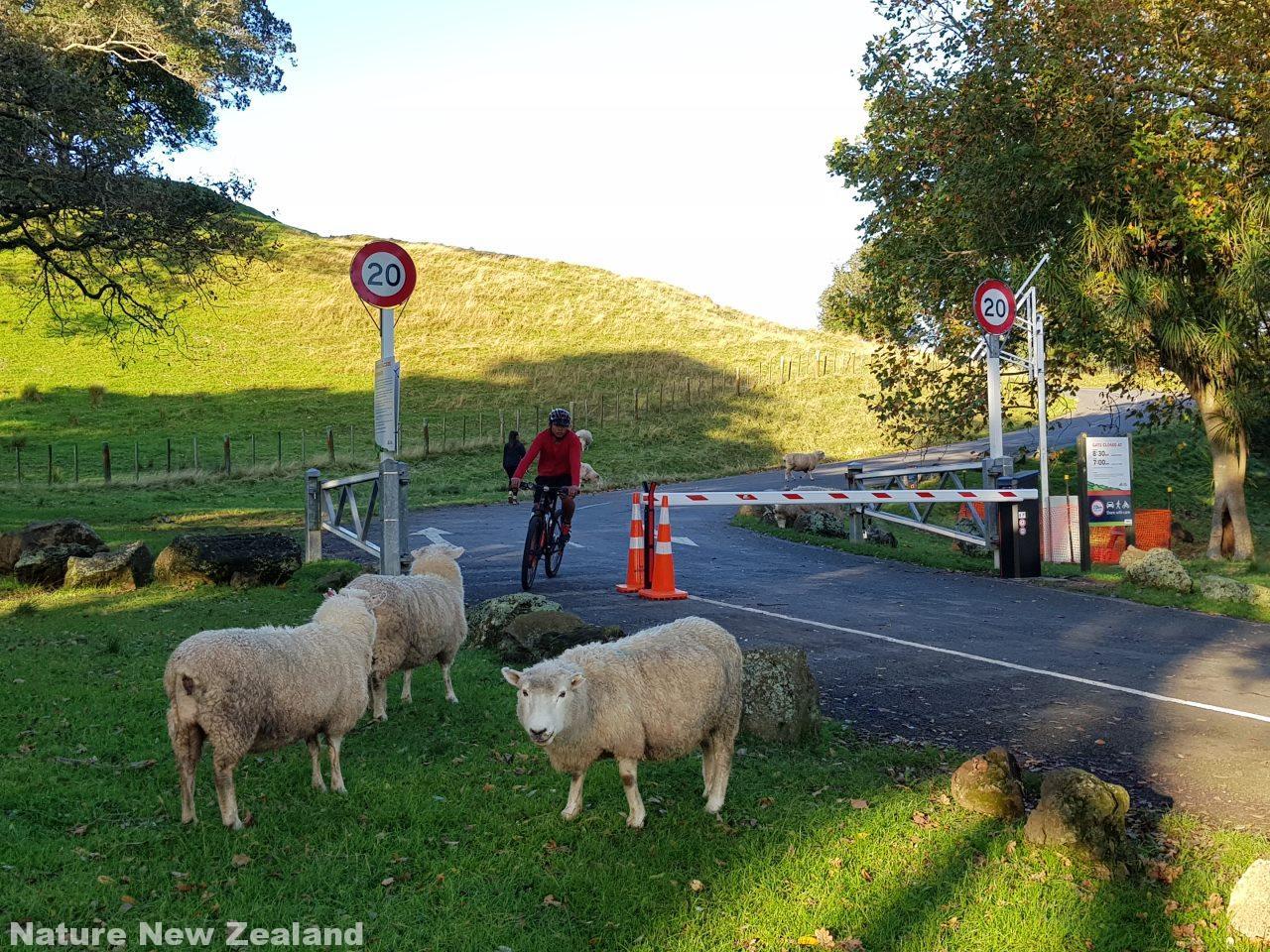 one tree hillへの頂上への車の乗り入れ禁止を示すゲート。筆者撮影2018年5月。羊は通っていいよ。