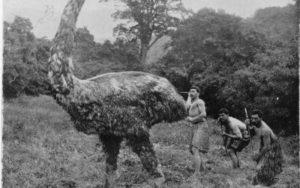 たった130年前までNZの巨鳥『モア』は生息していた!?貴重なインタビュー証言「背丈よりも大きな鳥が・・」