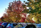 紅葉みごとな秋のニュージーランド。でも、原生林は紅葉しないって本当!?