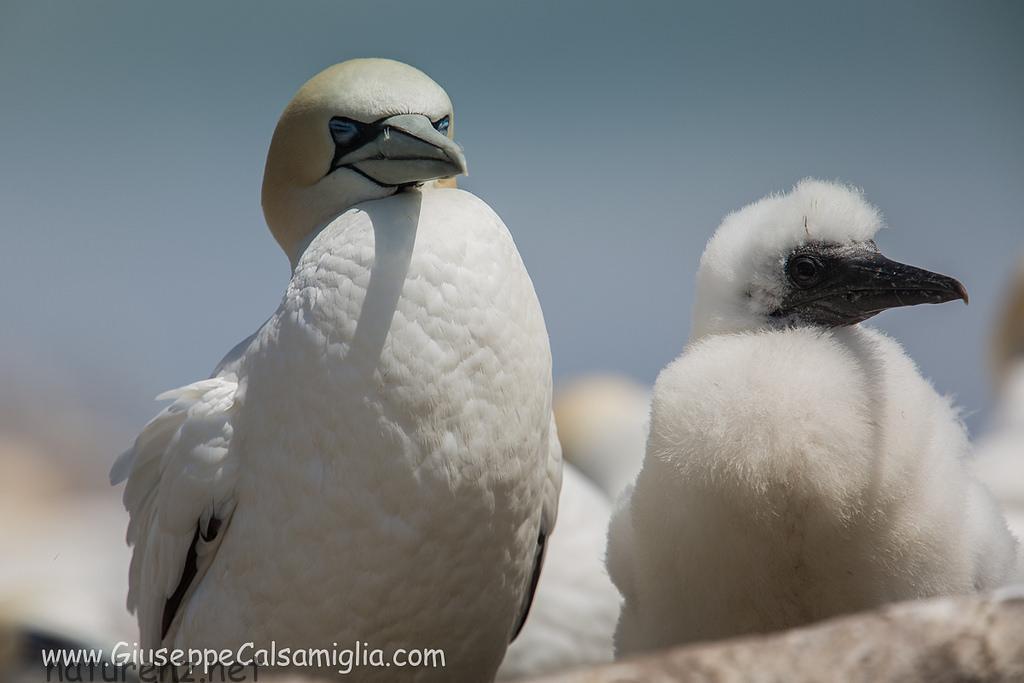 真っ白でかわいい鳥のヒナたち!11~12月はムリワイビーチのベスト・シーズン