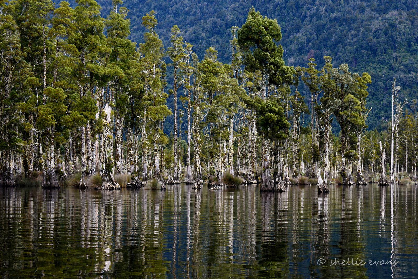 マオリ語との闘い!ニュージーランドの植物は名前がユニークすぎる!!