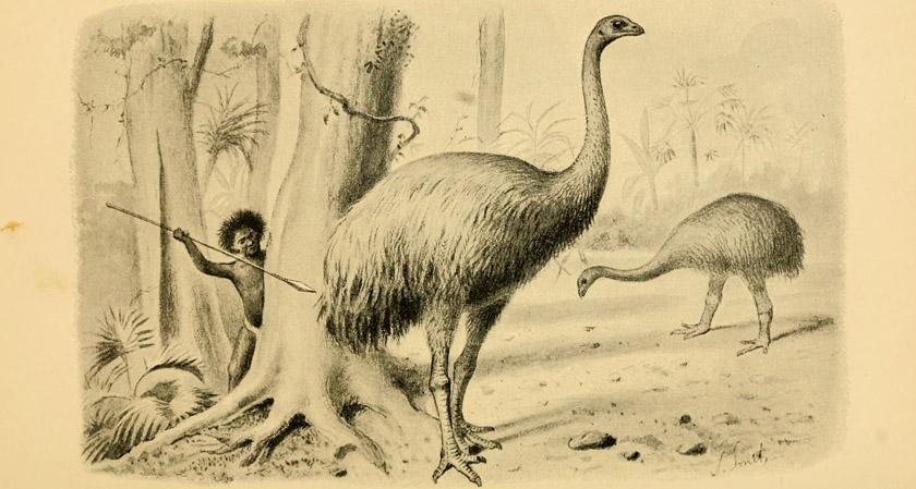 ニュージーランドの巨鳥・モアはなぜ絶滅したのか?