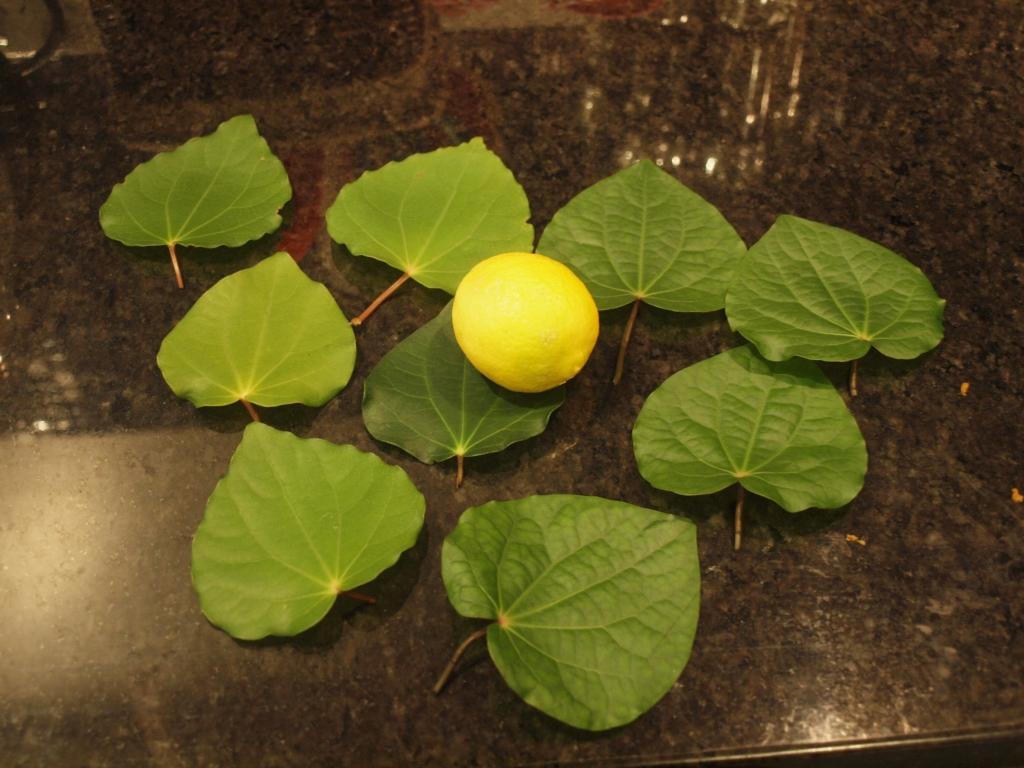 """マオリ族も利用した""""森のハーブ""""を自宅で再現!カワカワ茶ってどんな味!?"""