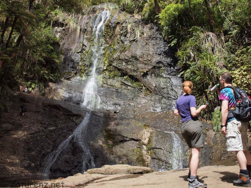 NZでトレッキングをするなら覚えておきたい植物10選